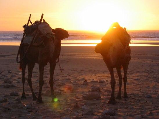 Trek au Maroc et marche le long de l'atlantique au Maroc